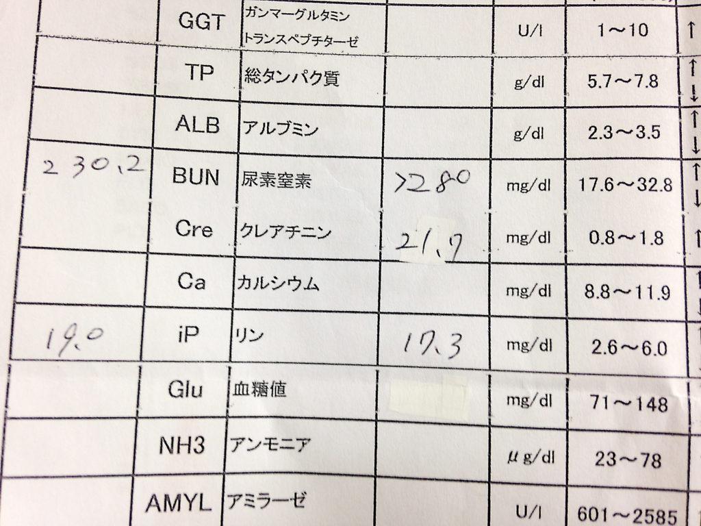 血液検査の結果 5回目