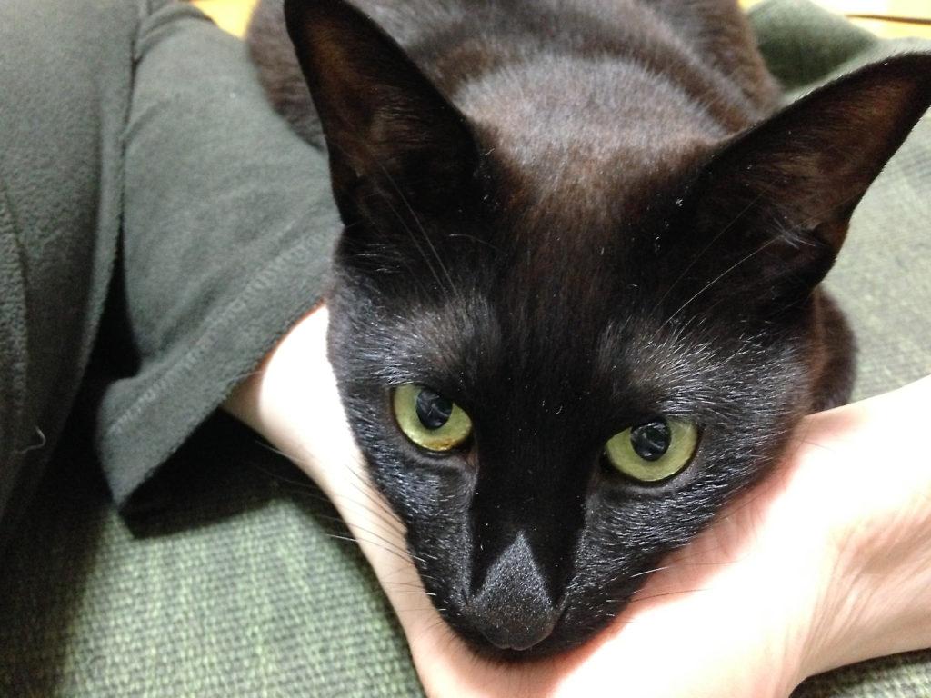 もう1匹の愛猫