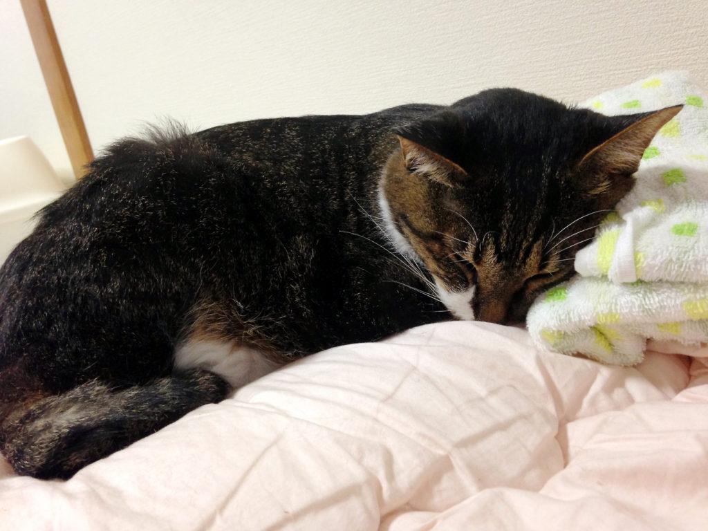 しんどそうに眠る愛猫