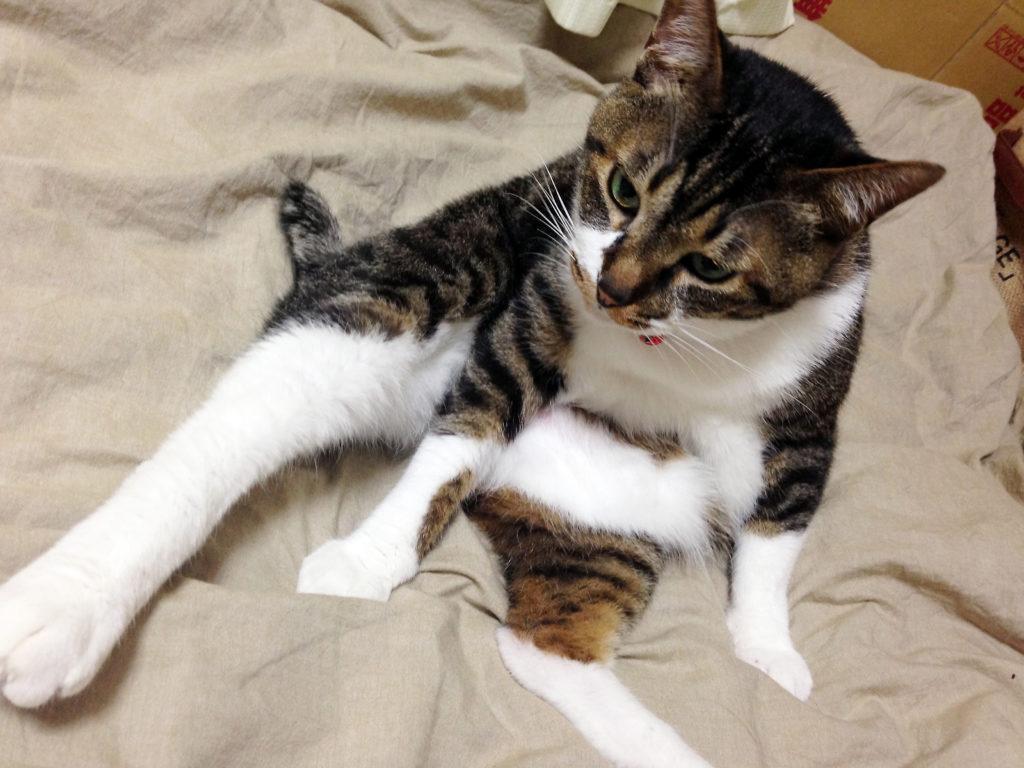 腎不全になる以前の愛猫