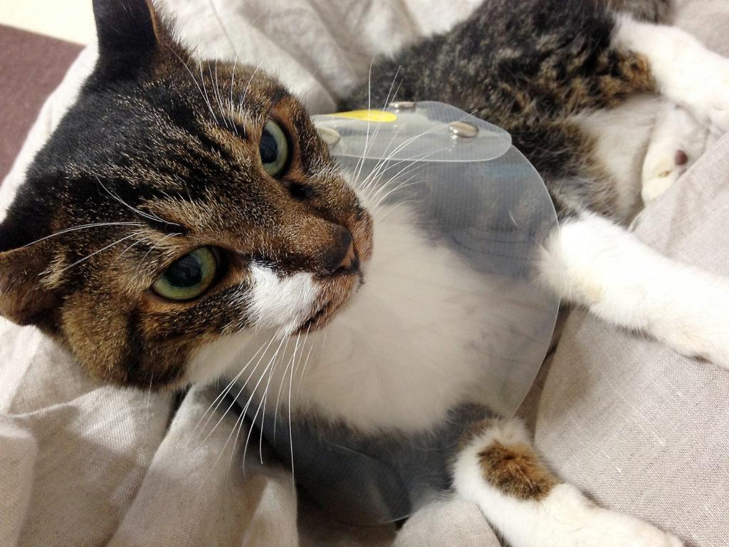 ネッカーを付けた愛猫