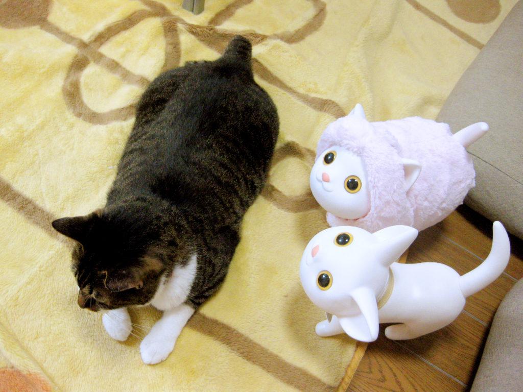 腎不全になる前のふっくらしていた愛猫