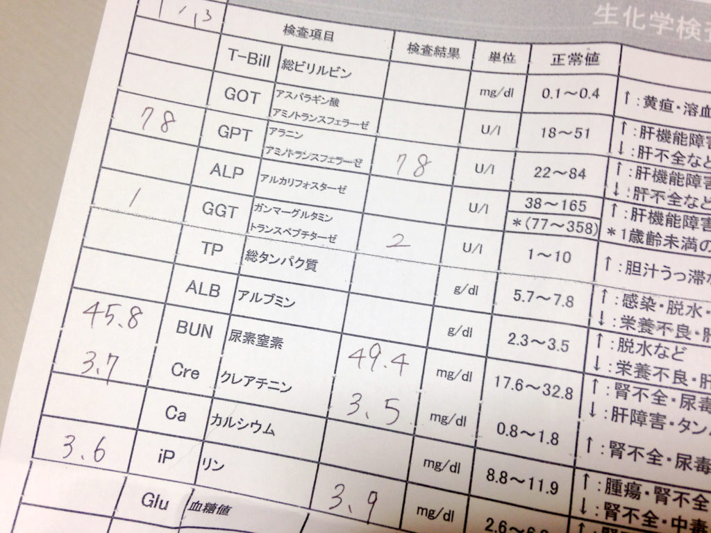 血液検査の結果 17回目