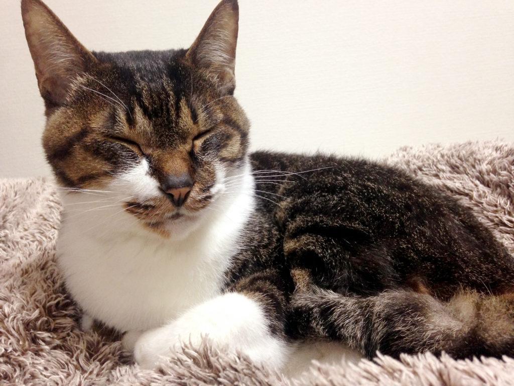 布団の上の愛猫