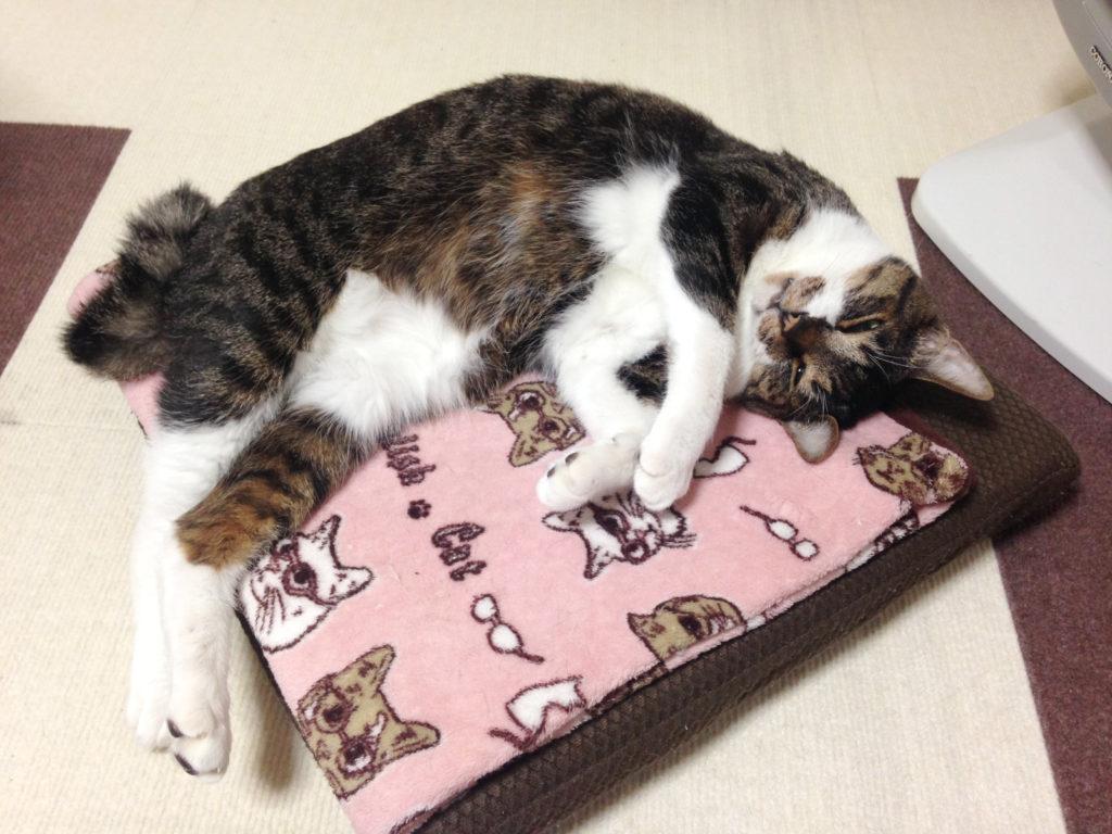 電気ストーブの前で寝転ぶ愛猫